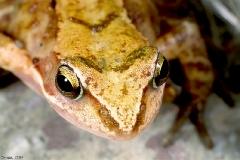 żabka_1