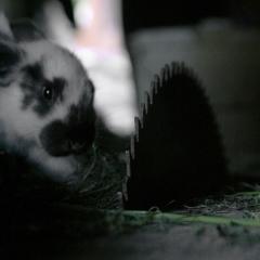 królik :)_1
